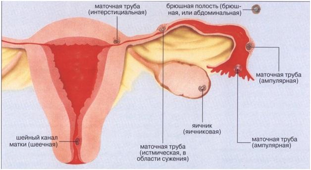 spermatozoid-zhivet-v-matke