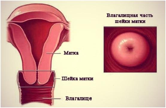 kak-viglyadit-vagina-v-nutri