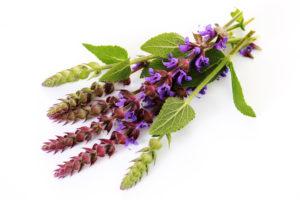 Шалфей для увеличения эндометрия