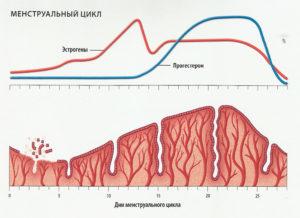 показатель толщины эндометрия