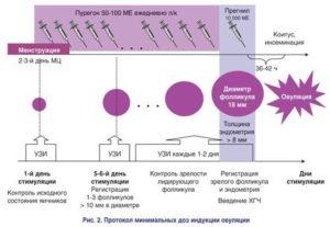 Препараты для стимуляции овуляции: Препараты для стимуляции овуляции. Уколы и таблетки, помогающие забеременеть