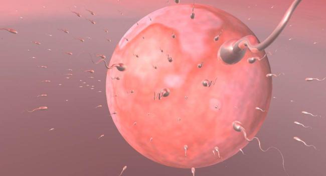 сколько живут в организме паразиты