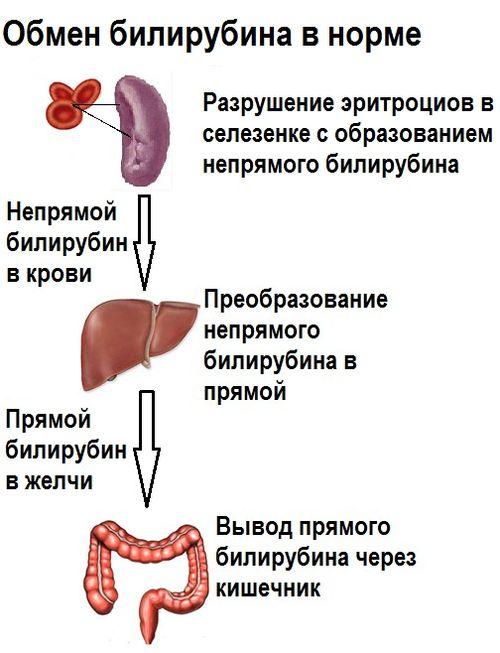 Повышен билирубина в крови при беременности
